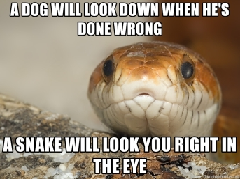 a-dog-will-look-down-when-hes-done-wrong-a-snake-will-look-you-right-in-the-eye