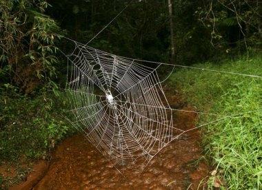 spider-web-teaser